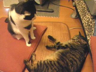 猫の兄妹喧嘩