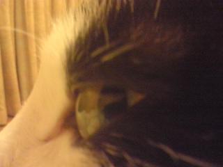 猫の謎に迫る