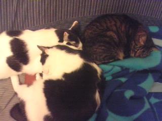 毛布と猫と