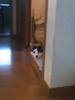 餌を待つ猫達