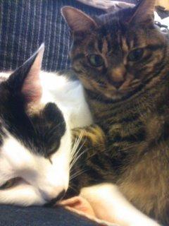 猫、人型Mii